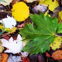Вечное ложе листьев. :: Мила Бовкун