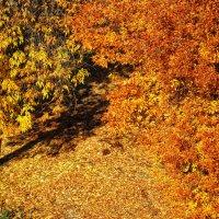 Последнее золотое покрывало осени :: Татьяна Губина