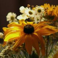 bouquet of autumn flowers :: Halyna Hnativ