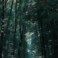 Лес загадочен и мрачен :: Мария Трубкина