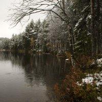первый снег :: Людмила Кваша
