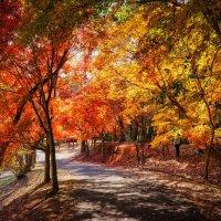осень :: Slava Hamamoto