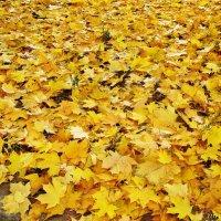 Ковер  из желтых листьев :: Лидия (naum.lidiya)
