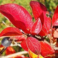 Яркие краски :: Лидия (naum.lidiya)