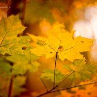 Золотая осень :: Светлана Сушинских