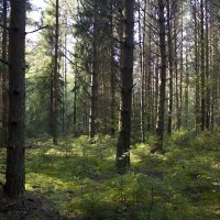 таинственный лес :: Екатерина Баранова