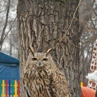 глаза на дереве :: Гоген Егорыч Лесков