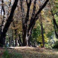 Киев. Мариинский парк :: Владимир Бровко