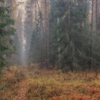 Туманный лес... :: марк