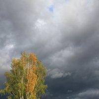 Осень :: виктория Скрыльникова