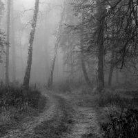 Туманное  утро... :: Валерия  Полещикова