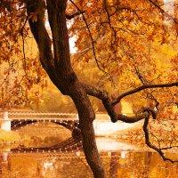 Осень в Питере :: Alex DO