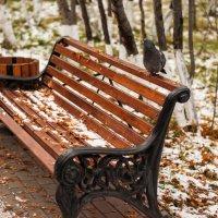 Вот и снег уже пошёл :: Sergey