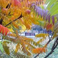 Осень :: Serg
