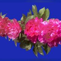 Цветы солнца 14.1 :: Владимир Хатмулин