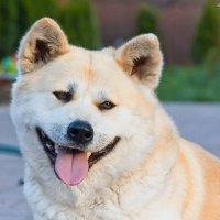 Собака-улыбака) :: Мария Литвинова