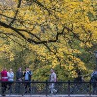 Осень в Кисловодске :: ФотоЛюбка *