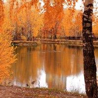 Уплывает осень, уплывает уткой сизокрылой по воде :: Татьяна Ломтева