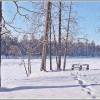 Нежность зимнего снега :: Лидия (naum.lidiya)