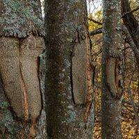 В осеннем лесу :: Ирина Никифорова