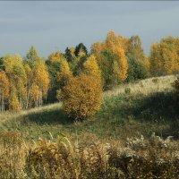 Осенний гобелен :: Виктор (victor-afinsky)