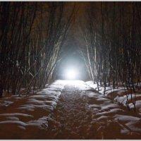Однажды в тёмном лесу... :: Кай-8 (Ярослав) Забелин