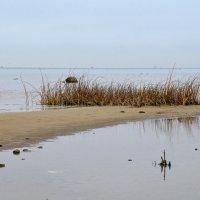 Ирокез  на воде :: Николай Танаев
