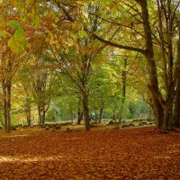 Осень Золотая.... :: lyuda Karpova