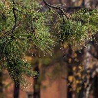 tears of autumn :: Dmitry Ozersky