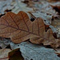 Осень. :: Михаил MAN