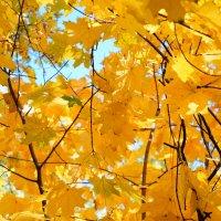 осень :: Элла Чуксина