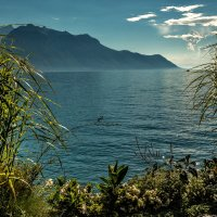 The Alps 2014 Switzerland Montreux 4 :: Arturs Ancans