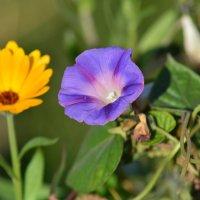 Цветы :: Николай Лапин