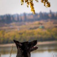 Последние  теплые осенние денечки :: Оксана Харламова