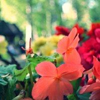Красочное лето :: Miss Taty .