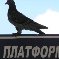 Внимание!!! Через пять минут отлетаю :: Николай Сапегин