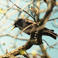 Птичка :: Сурикат Сусликов