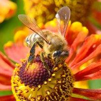 Пчелы 1 :: Viacheslav