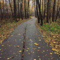 Есть подозрение, что - Осень IMG_2694 :: Андрей Лукьянов