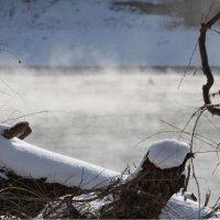 Дыхание зимнего утра )) :: Анна Гиперборея
