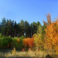 Осенняя пора ,очей очарованье.... :: лидия Кашицина