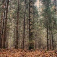 Туманный лес 5 :: марк