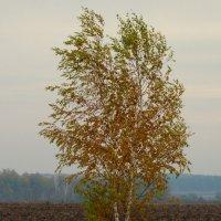 и на хломе,средь желтой нивы... :: татьяна горбунова