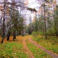 Эх , дороги , осенние дороги , дороги в лесу !!! :: Мила Бовкун