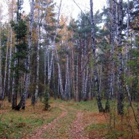 Дорога в лесу . :: Мила Бовкун