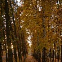 Деревья :: Наталья Чуфистова