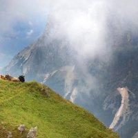 Альпийские коровы :: Мария Кондрашова