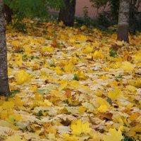 Ах, эти дивные осенние ковры.... :: Tatiana Markova