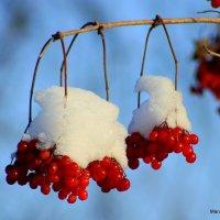 калина под снегом :: Marusiya БОНДАРЕНКО