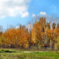 Осенняя пора... :: Тамара (st.tamara)